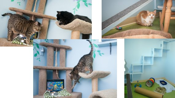 Kitty Camp boarding offers shared space in our playroom