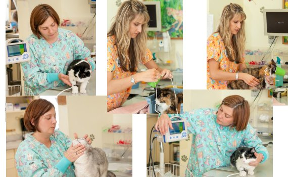 Veterinary Technicians are like nurses